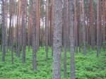 Long term investing involves the old trees and the forest idea